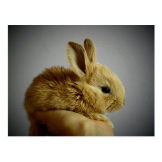 Niedliches kleines Kaninchen in der Hand Postkarte