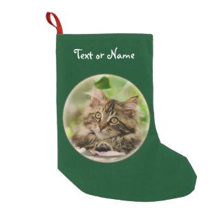 Niedliches Maine-Waschbär-Katzen-Kätzchen - Kleiner Weihnachtsstrumpf