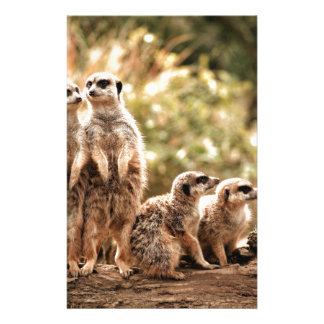 Niedliches Meerkats Briefpapier