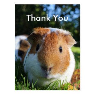 Niedliches Meerschweinchen danken Ihnen Postkarte