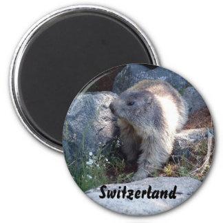 Niedliches Murmeltier die Schweiz Runder Magnet 5,1 Cm