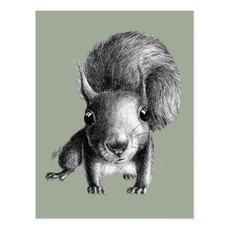 Niedliches neugieriges Eichhörnchen Postkarte