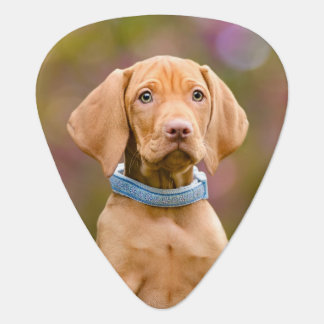 Niedliches puppyeyed Ungar Vizsla Hundewelpen-Foto Plektron