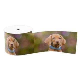 Niedliches puppyeyed Ungar Vizsla Hundewelpen-Foto Ripsband