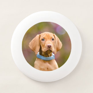 Niedliches puppyeyed Ungar Vizsla Hundewelpen-Foto Wham-O Frisbee