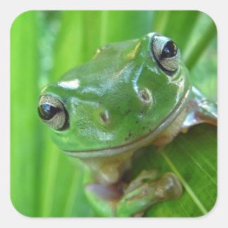 Niedliches schauendes Baum-Frosch-nahes hohes Quadratischer Aufkleber