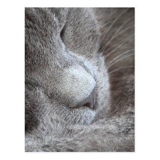 Niedliches Schlafenkätzchen Postkarte