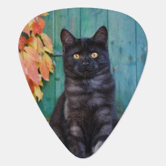 Niedliches schwarze Katzen-Kätzchen mit Rot Plektron