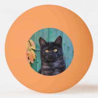 Niedliches schwarze Katzen-Kätzchen mit Rot Tischtennis Ball