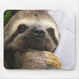 Niedliches Sloth-Gesicht Mauspads
