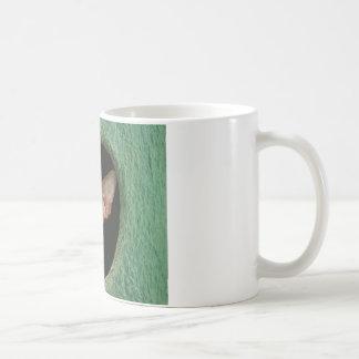 Niedliches sphynx Kätzchen Kaffeetasse