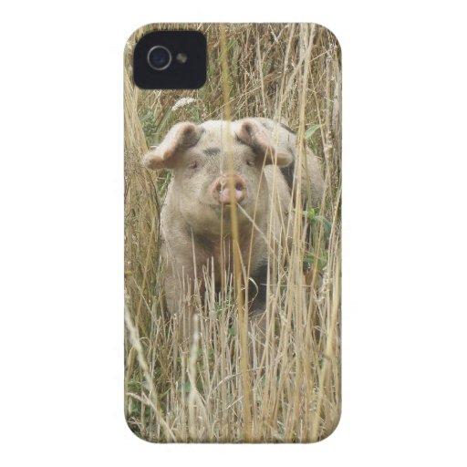 Niedliches Spotty Schwein-BlackBerry-mutiger iPhone 4 Hülle