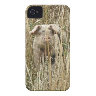 Niedliches Spotty Schwein-BlackBerry-mutiger iPhone 4 Etuis