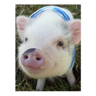 Niedliches Topf-Bauch-Schwein Postkarte