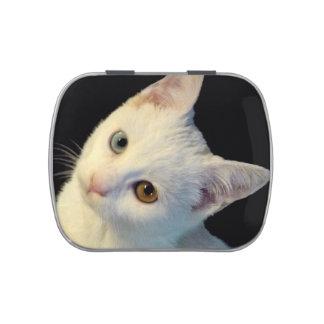 Niedliches Zinn White Turkish Van Kitten Candy Vorratsdose