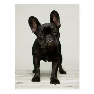Niedlichster französische Bulldoggen-Welpe Postkarten