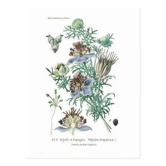 Nigella hispanica postkarte