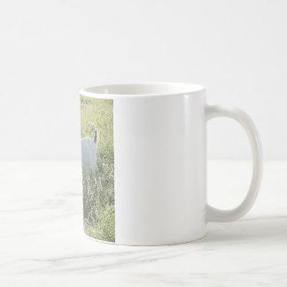 Nigerische zwergartige Ziegen-Kaffee-Tasse Kaffeetasse