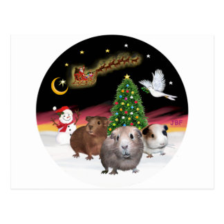 NightFlight - 3 Meerschweinchen Postkarten