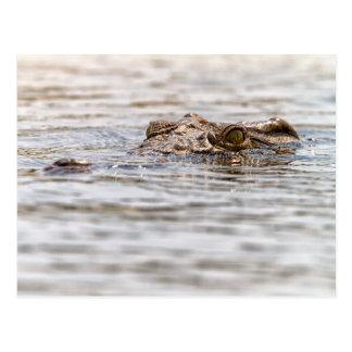 Nil-Krokodil Postkarte