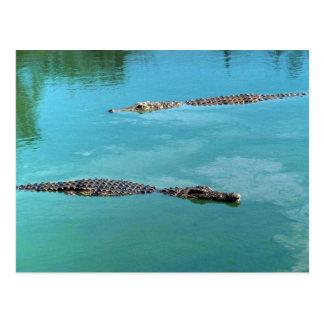 Nil-Krokodile Postkarte