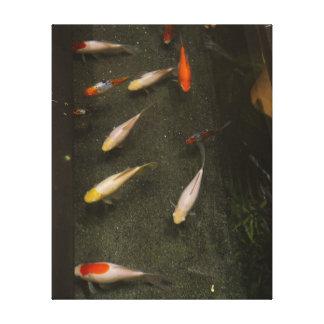 Nishikigoi (Koi Fisch) Leinwand