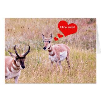 """Nizza Gestell der Antilopen-Liebe """"! """" Grußkarte"""