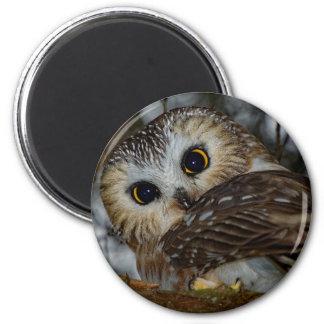 Nord Säge-whet Eule in einem Baum Runder Magnet 5,7 Cm