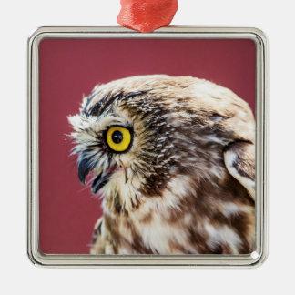 Nord Säge-Whet Eulen-Porträt Silbernes Ornament