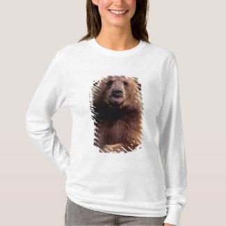 Nordamerika, Kalifornien, schwarzer Bär des Zimts T-Shirt