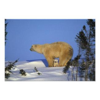 Nordamerika, Kanada, Manitoba, Churchill. 10 Kunstfoto