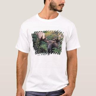 Nordamerika, Kanada, Neuschottland, Kap-Bretone T-Shirt