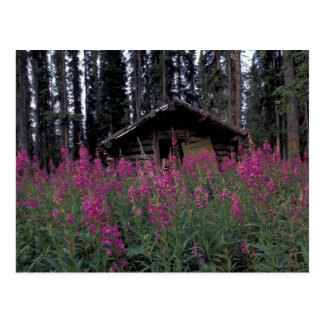 Nordamerika, Kanada, Yukon. Verlassene Trappers Postkarte