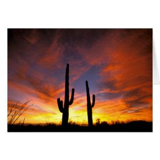 Nordamerika, USA, Arizona, Sonoran Wüste Karte