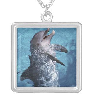 Nordamerika, USA, Hawaii. Delphin 2 Versilberte Kette