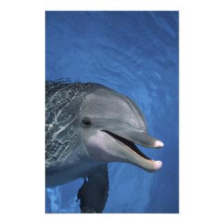 Nordamerika, USA, Hawaii. Delphin Kunstfoto