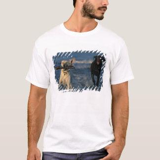 Nordamerika, USA, Kalifornien, Half Moon Bay. 2 T-Shirt
