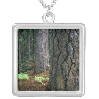 Nordamerika, USA, Kalifornien, Yosemite Versilberte Kette