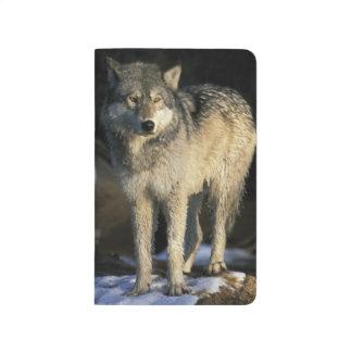 Nordamerika, USA, Minnesota. Wolf (Canis Taschennotizbuch
