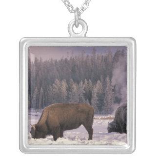 Nordamerika, USA, Wyoming, Yellowstone NP, Versilberte Kette