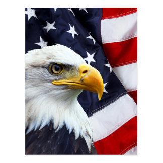 Nordamerikanischer Weißkopfseeadler auf Postkarte