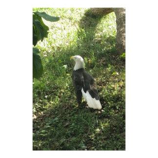 . Nordamerikanischer Weißkopfseeadler Briefpapier
