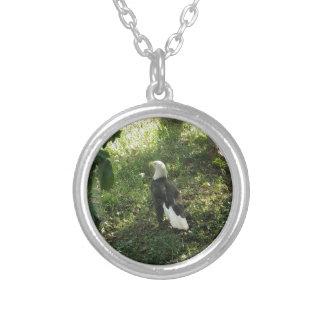 . Nordamerikanischer Weißkopfseeadler Versilberte Kette