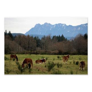Nordbiegungs-Esel-Verein Fotodruck