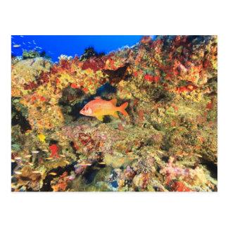 NordHuvadhoo Atoll, Südmalediven, Postkarte