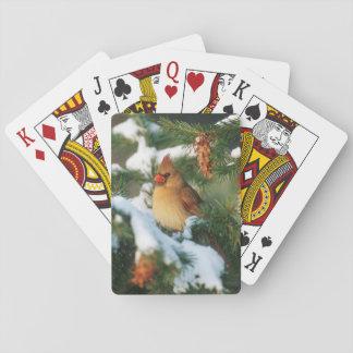 NordKardinal im Baum, Illinois Spielkarten