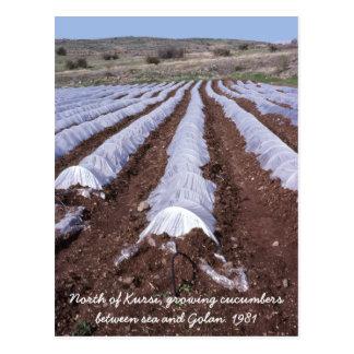 Nördlich Kursi Golan des Gurken-Feldes Postkarte