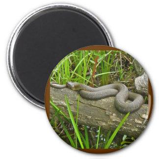 Nordwasser-Schlange, die auf Runder Magnet 5,1 Cm