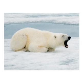 Norwegen, Svalbard-Archipel, Spitzbergen 3 Postkarte