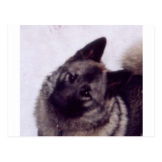 Norwegian_Elkhound Postkarte